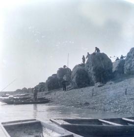 1964安徽省农业展览馆筹备组底片一张:当涂县湖阳公社船运草肥料