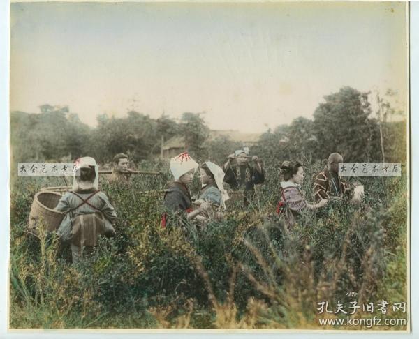 清代日本茶道历史,茶园生产场景, 摘茶女子,称茶商人,担茶男丁等,24.7X20.5厘米