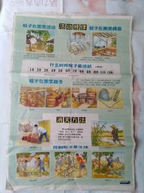 老宣传画:除四害挂图:消灭蚊子1、2两张,第二张完好。第1张缺一角已用老纸衬补。第二张上多张小图类似小连环画