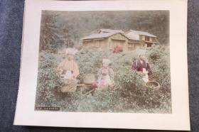 清代日本茶道历史,茶园生产场景, 摘茶女孩,大幅上色蛋白照片,大约1880年代左右,27X21.3厘米