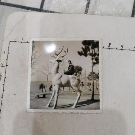 美女骑石鹿照