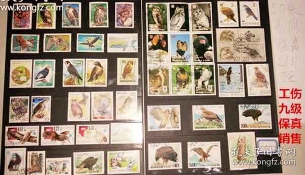 50枚外国猛禽类邮票,票面精美,无重复!请注意图片及说明