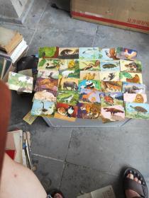 早期彩色动物画片 31张 年历片大小
