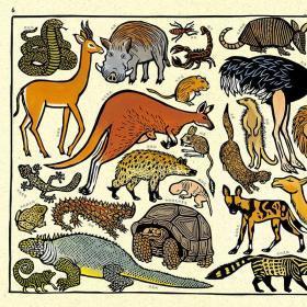 我的动物园 大开本法国插画版画儿童科普百科启蒙认知书籍