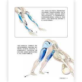 现货 精准瑜伽解剖书4 身体倒立及手臂平衡体式 运动瑜伽健身美体训练书籍