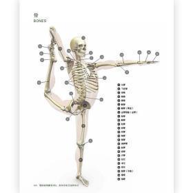 现货 精准瑜伽解剖书4册套装 运动瑜伽健身美体训练书籍 瑜伽动作基本分解图 瑜伽体式瑜伽教程初级零基础入门书籍
