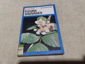 法文原版 科普画册 《野生花卉》