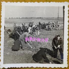 老照片:50年代,美女——陈竹君老师,参加劳动改造。【民国私立上海妇女补习学校——陈竹君老师家庭系列】