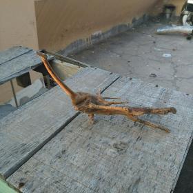 根雕长颈鸟
