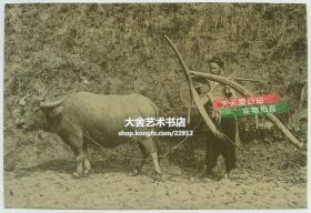 清代南方广东福建一带,扛着犁等农具,赶水牛去耕地的年轻农民老照片