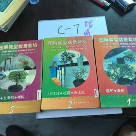 图解微型盆景栽培.5.木瓜·长寿梅·榉树