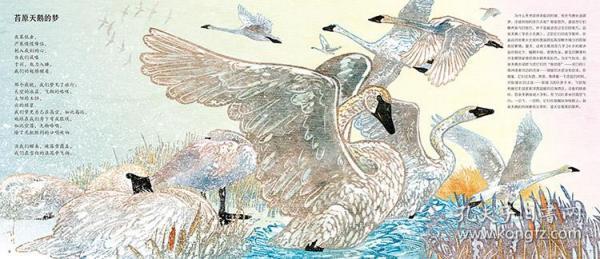 冬的口哨朝着严寒行进儿童绘本科普百科科学绘本硬壳精装蒲公英童书馆