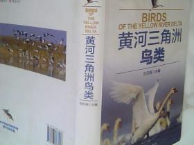 黄河三角洲鸟类