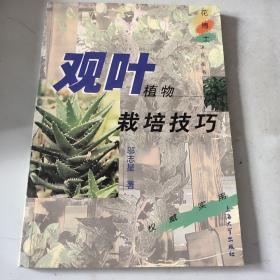 观叶植物栽培技巧