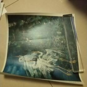 畫片,黃永玉林中池塘,8開