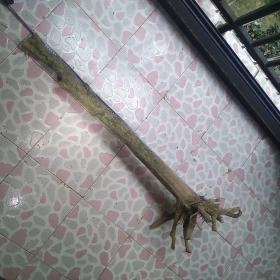 黃楊木 拐杖  純自然型  重量3公斤