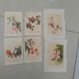 早期画片,约50开,田世光工笔花卉,存8张〈背面贴纸,〉,
