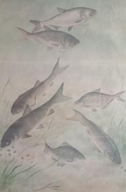 中国经典年画宣传画大展示---文革年画系列---《家鱼混合饲养》-------虒人荣誉珍藏