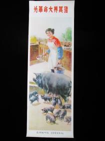 文革宣传画 为革命大养其猪(2开长:77X26厘米)