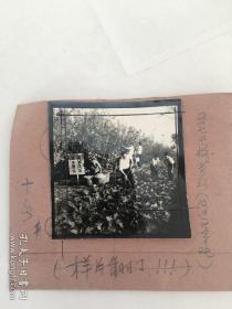 文革老照片底片:五七干校劳动改造世界观