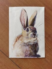 兔子彩色原稿画稿