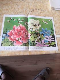 教学图片  蜜蜂和熊(全套6张全)