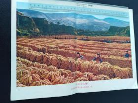 農業學大寨      不成冊。大小自定。滿40元包郵。如圖。品自定。