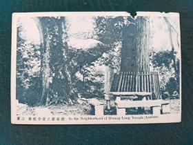 民国《庐山黄龙寺旁之娑婆树》明信片一张,商务印书馆印行,品相如图,右上角有小缺,但画面整体基本完整