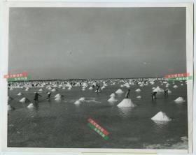 1957年哥倫比亞鹽田鹽床老照片,鹽業生產歷史資料