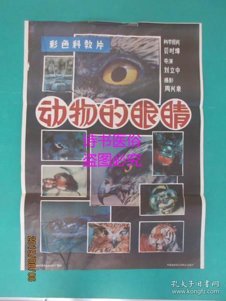 電影海報:動物的眼睛(74.5*54cm)