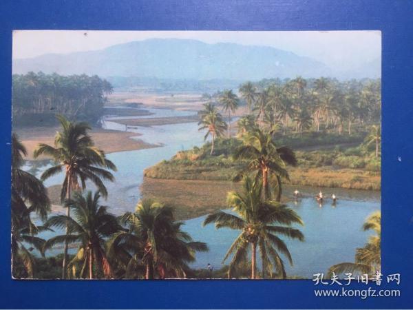明信片/海南島椰林