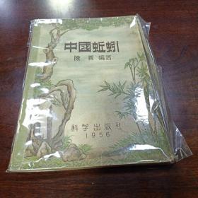 中国蚯蚓。