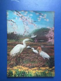 塑料彩色外國立體感圖片(鶴)