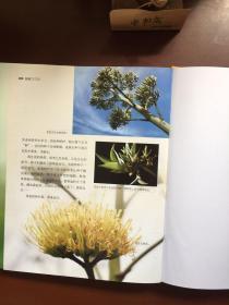植物的游戏:探索大自然