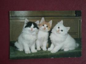 三只小猫实寄明信片(贴八十年代海南普票)
