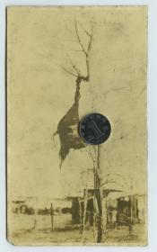 清末民初街头行刑后将长辫子首级悬挂于树上老照片,血腥慎入