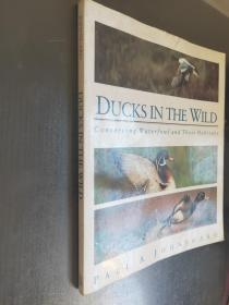 Ducks in the Wild: Conserving Waterfowl and Their Habitats  英文原版  大16开