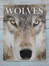 Wolves: a Stunning Glimpse into Nature's Hunters in the Wild