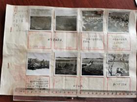 1965年桐城徐河人民公社参加全国农业靠大寨展览照片原稿22个帖页,140张老照片