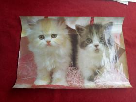 懷舊收藏《灰黃貓》中國攝影出版社出版36*52cm