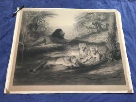 ★大英博物馆藏画★1894年巨幅铜版画《值守的狮子》— 法国现实主义女画家罗莎.博纳尔(Rosa Bonheur,1822 - 1899年)作品 裱贴法 95.9*74.5厘米 有版画商协会盲印