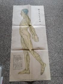 针灸取穴参考图(三)  一张图,沈白涛绘制,科技卫生出版社,1958年12月一版一印