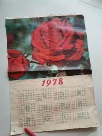 月季花年画----1978年