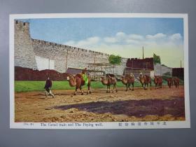 民国彩色邮政明信片—北平城外运输骆驼
