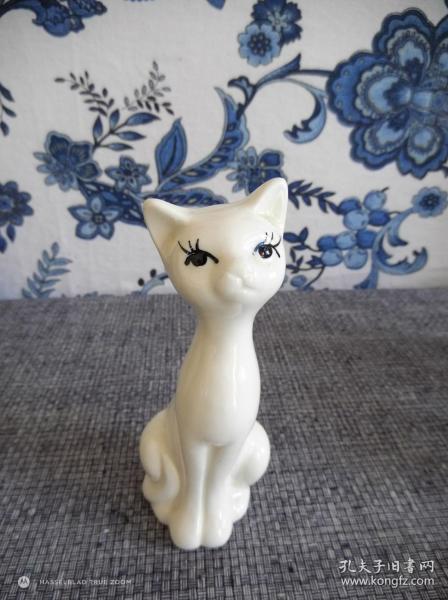 俗名:白噘嘴貓
