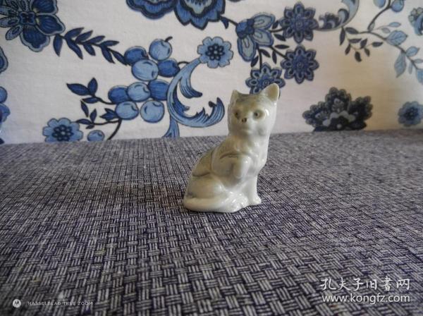 俗名:矮油貓