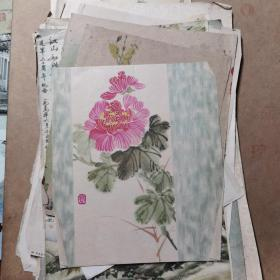 50年代 花卉图 20张