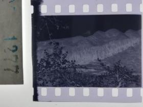 年代照片底片119 山林