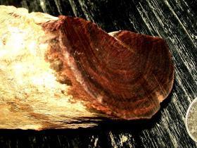 海南黄花梨紫油梨老木料