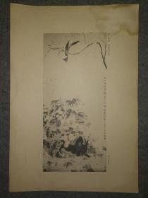 民国珂罗版:华嵒~秋艳禽兔图